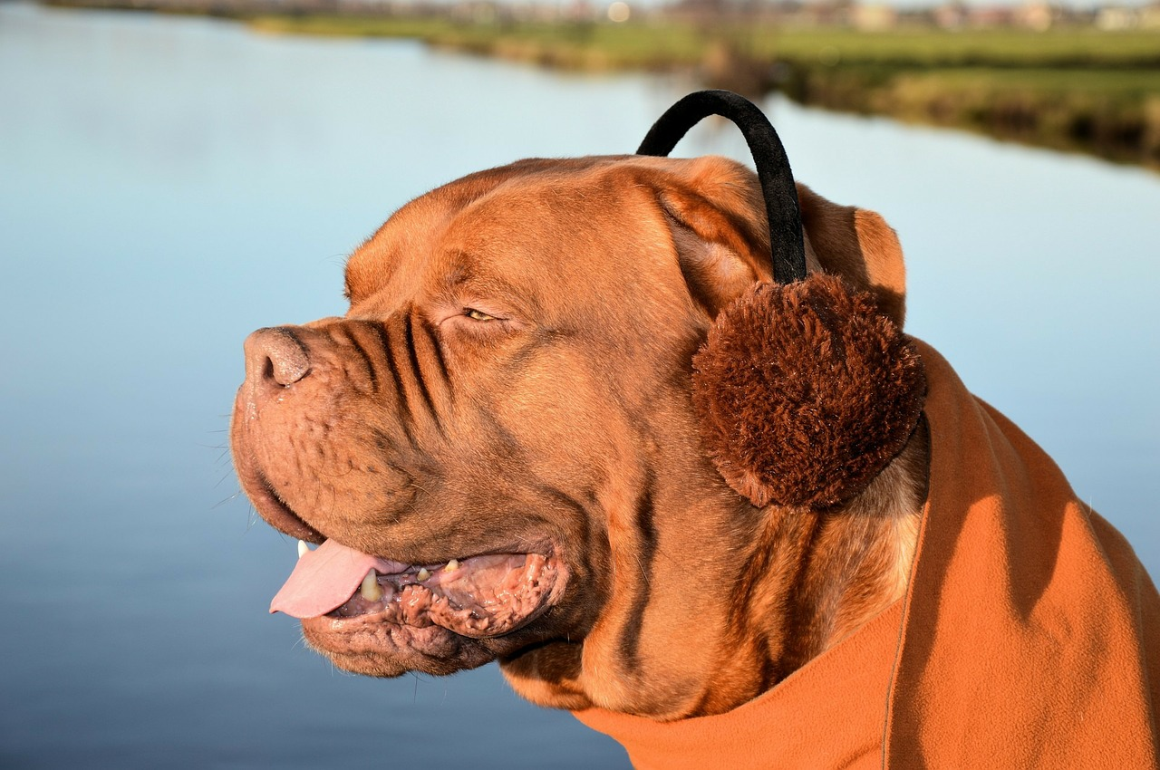 best earmuffs for sleeping